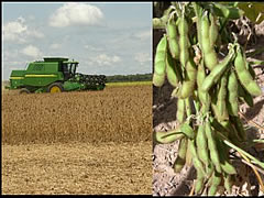 soy farms for sale in Brazil